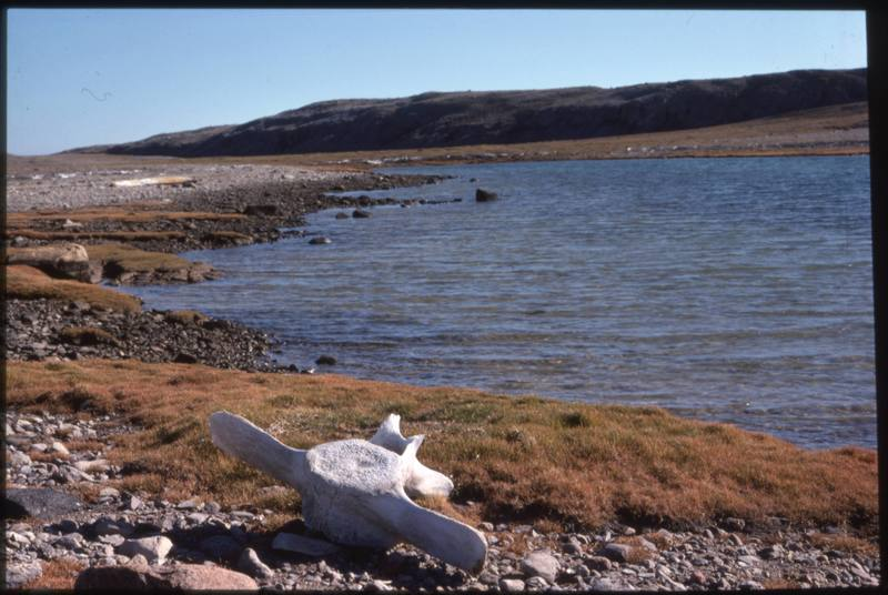 North end of Cape Parry, bowhead vertebra and area around (Sept '76)0.jpg