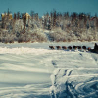 Dogsled on Boot Lake