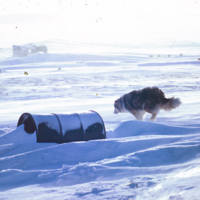 Dog Running by a Barrel
