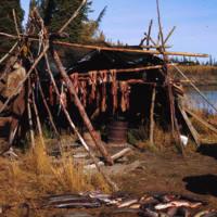 Fish drying on the Mackenzie River