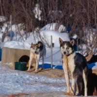 https://arrl-web002.artsrn.ualberta.ca/icrc/201801-upload/Aklavik ICRC Elders Slides/102_ Dogs.jpg