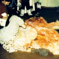Cleaning Bear Skin