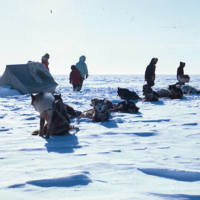 Sled Dogs at a Seal Hunt Camp