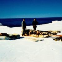 Hunting Seals