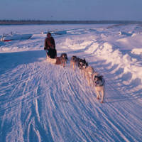 Man and child dog sledding on the Mackenzie River