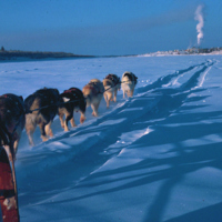 Dogsled team heading to Inuvik