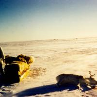 Hunting Caribou